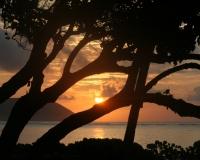 sunris on Hi between trees by photographer miyuki edwards