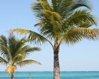 Bahamas palms by photographer miyuki edwards