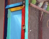 miyuki edwards photograph of bird cage